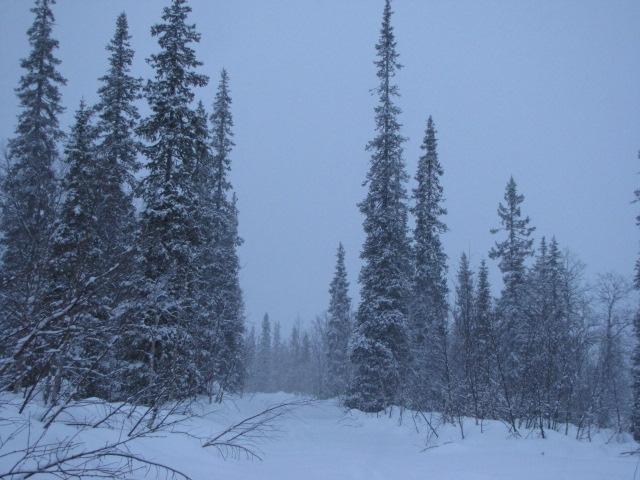 The_snowfall.JPG
