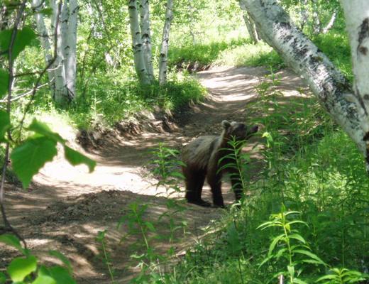 Meet_the_bear_.JPG