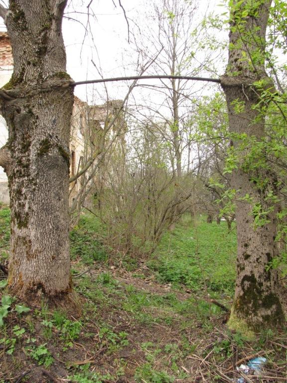 drevy.jpg