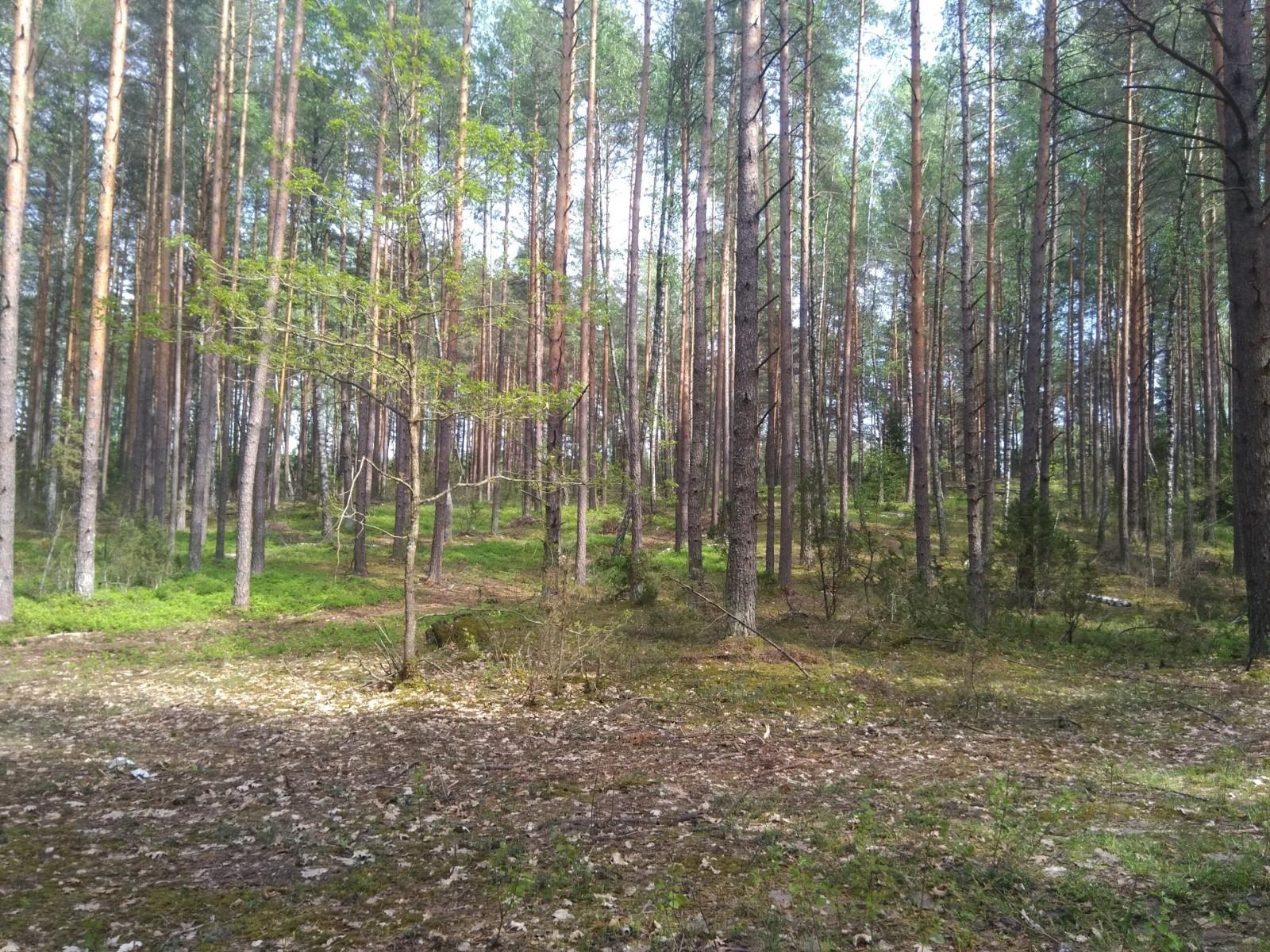 PRuhtgriVSk