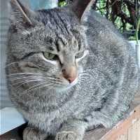 кот эдя