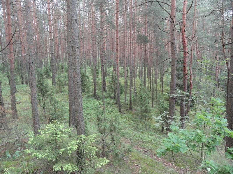 10. лес наверху.JPG
