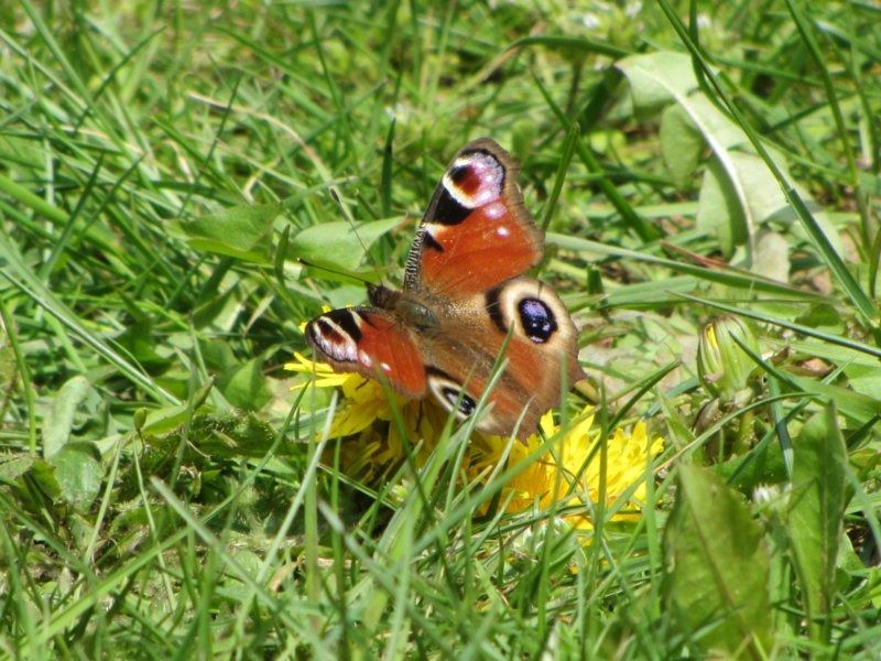 18. бабочка.JPG