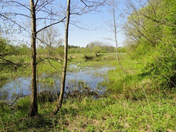 14 болото.JPG