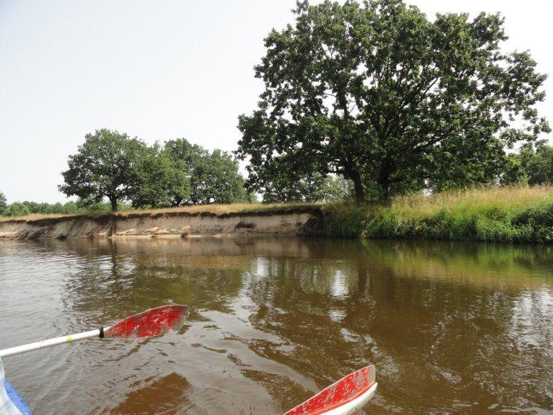 4. река. дубы.JPG