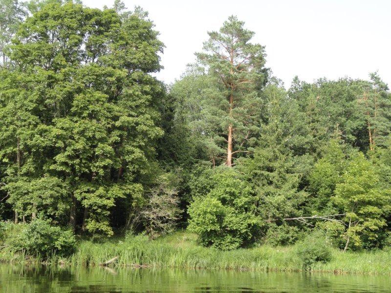 14. лес.JPG