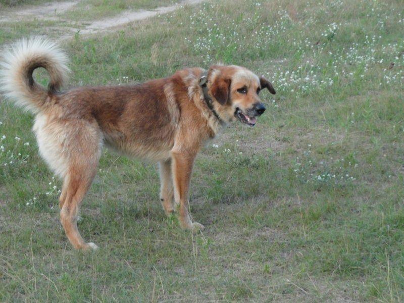 16. собака.JPG