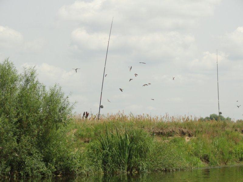5. птицы на лесках.JPG