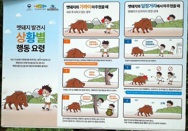 Corea01.jpg