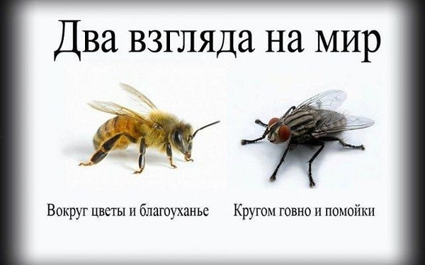 Mukhi_i_pchely_-180516.jpg