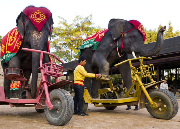 elefante_byke.jpg