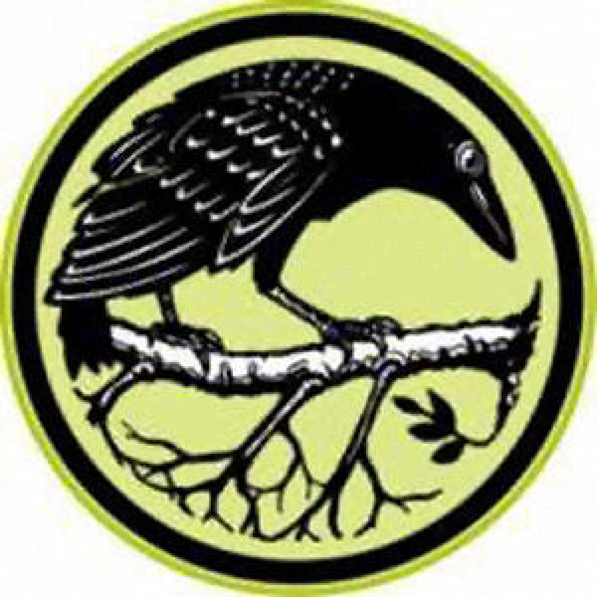 crow-best.jpg
