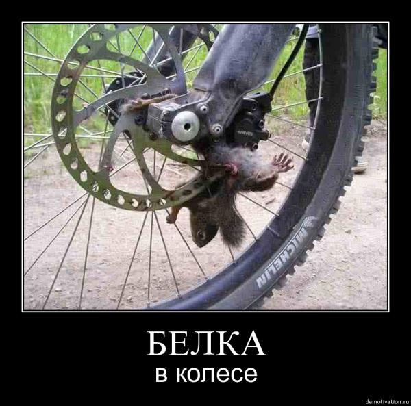 belka_na_rotore-600.jpg