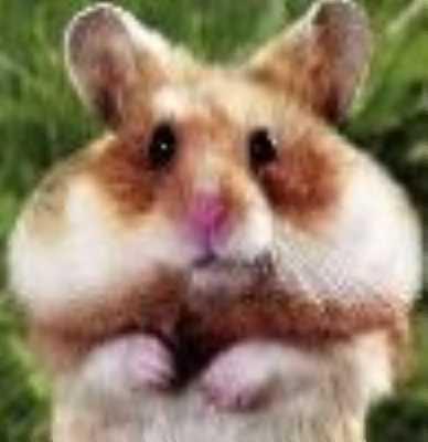 Cheeky_Hamster