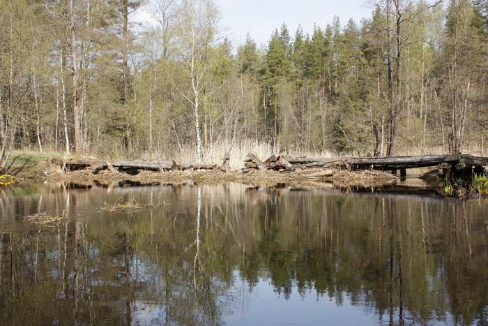Most_Krasnoarmeyskiy-2.jpg