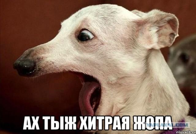 akh_ty_zh_khitraya_zh.jpg