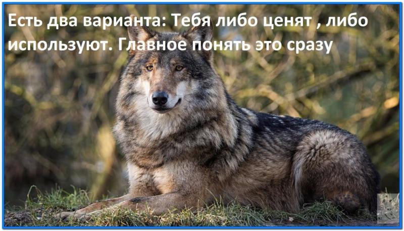 libo_tsenyat_libo_ispol'zuyut.jpg