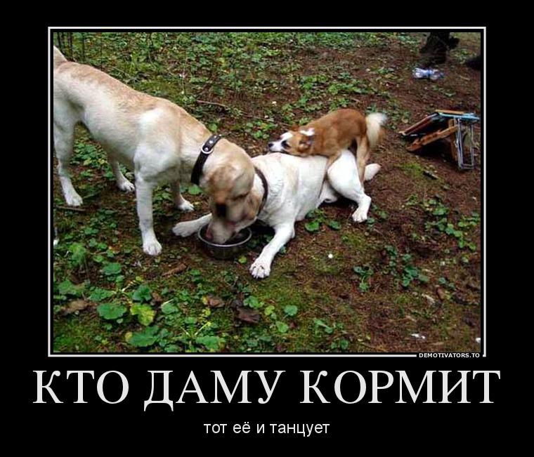 kto_kormit_tot_i_tantsuet.jpg