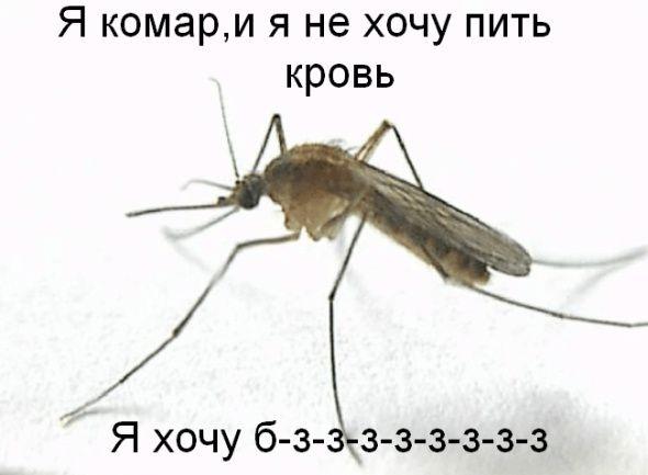 komar_kakoy_on_est'.jpg