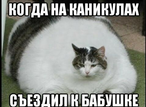 zhirnye-koty-166445189-orig.jpg