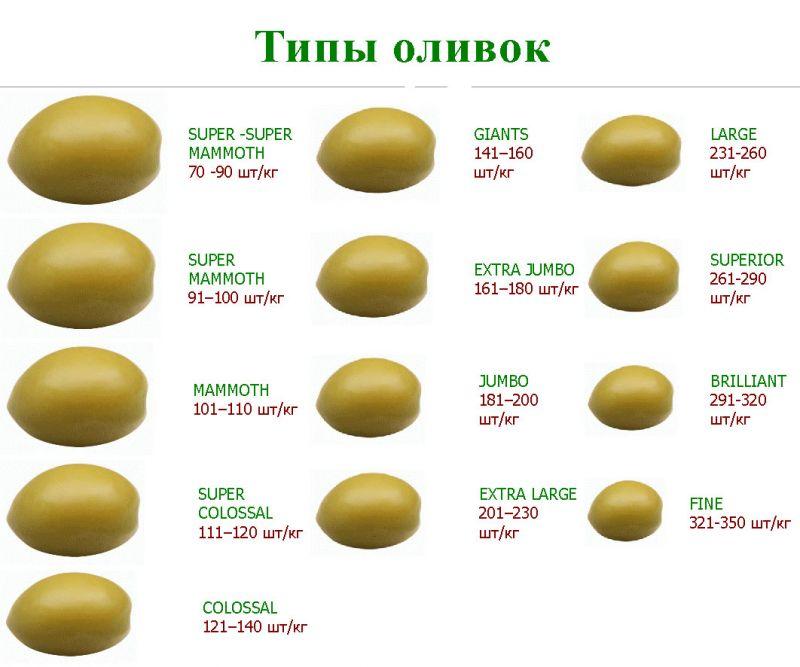 tip-oliv3e_enl1.jpg